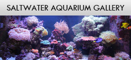 Saltwater - Aquarium Design and Installation Services in Waterdown