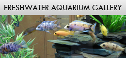Freshwater - Aquarium Design and Installation Services in Waterdown